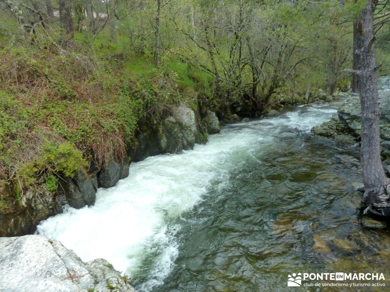 Río Lozoya - arroyo de la Angostura